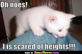 awww.ihasaflavor.com_lolcats_i_is_scared_of_heights.jpg